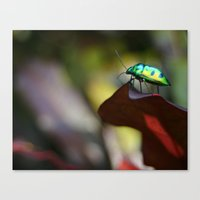 Iridescent Bug (Philippines) Canvas Print