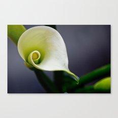 Lily Calla - ONE Canvas Print