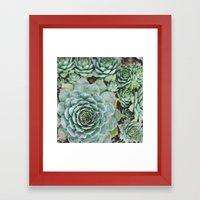 Succulents I Framed Art Print