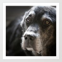 Old Labrador Portrait Art Print