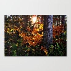 Autumn (in Scotland) Canvas Print