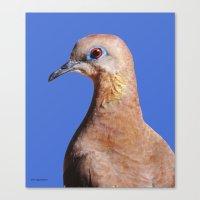 Dove closeup on blue Canvas Print