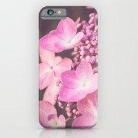 Botanical Pink Rose Purple Lace Cap Hydrangea Flower iPhone 6 Slim Case