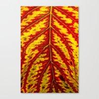 Tiger Leaf Canvas Print