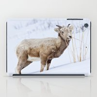Big Horn Sheep in the Snow iPad Case