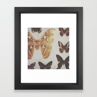 Butterfly specimens Framed Art Print