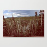 Moving Trees Canvas Print