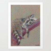 Racoon Sleeping Art Print