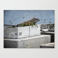 IGGY the Iguana  Canvas Print