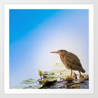 Crowned Night-Heron- Ham… Art Print