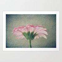 Flat Pink Gerbera Textured Art Print