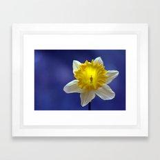 Daffodil in blue 9856 Framed Art Print