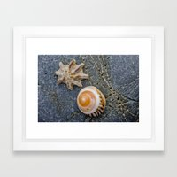 shell duo Framed Art Print