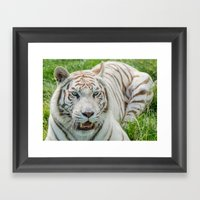 THE BEAUTY OF WHITE TIGERS Framed Art Print