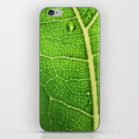 Fiddle Leaf Ficus Tree iPhone & iPod Skin