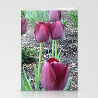 Queen Of Night Tulips Stationery Cards