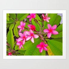 Tropics Art Print