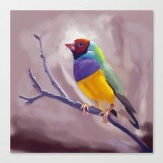 Gouldian Finch Canvas Print