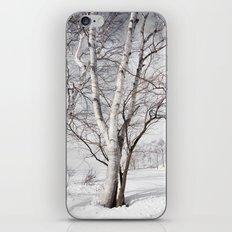Snowy Dark Trees iPhone & iPod Skin