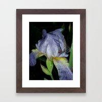Iris Tears Framed Art Print
