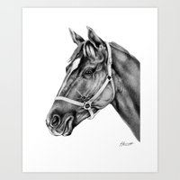 Affirmed (US) Thoroughbred Stallion Art Print
