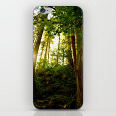Something 'Bout The Sun Between The Trees iPhone & iPod Skin