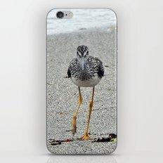 Greater Yellowlegs (Sandpiper) Looking at Camera  iPhone & iPod Skin