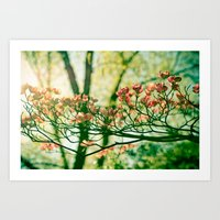 In The Limelight Art Print