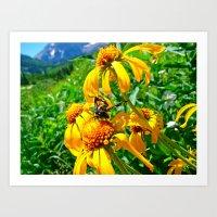 Colorado Butterfly Art Print