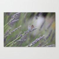 Lavender Butterflies - JUSTART © Canvas Print