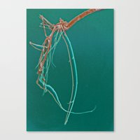 Shrimp Skull Canvas Print