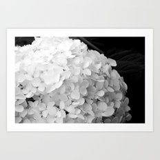 White flowers no.2 Art Print