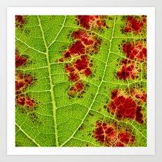 autumn wine leaf I Art Print