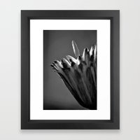 Tulip Tree Fruit Framed Art Print