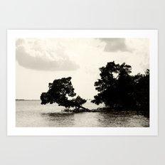 Mangrove cove  Art Print