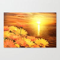 African Daisies on Backdrop of Sea of Cortez at Sunset Canvas Print