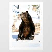 Chillin' Bear Art Print