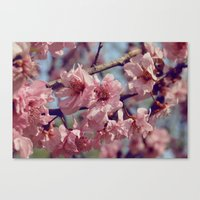Sakura... One Spring In … Canvas Print