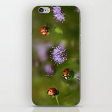 Ladybirds.... iPhone & iPod Skin