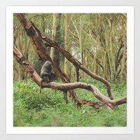 Wild Baboon in Kenya Art Print