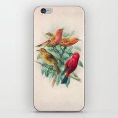 Songbirds iPhone & iPod Skin