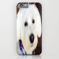 iPhone & iPod Case featuring Maxx dogg 2 by Laura Santeler