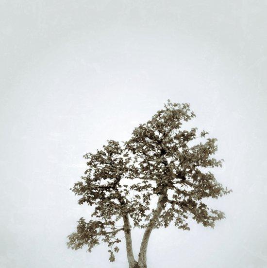 Tree #05 Art Print
