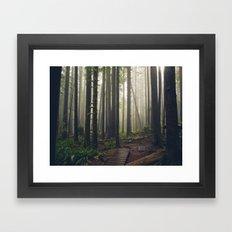 Rainforest of the Pacific Northwest Framed Art Print