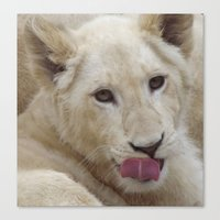White Lion Cub - The Nex… Canvas Print