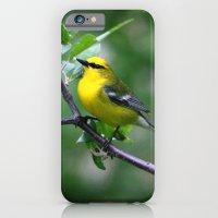 Blue-winged Warbler iPhone 6 Slim Case