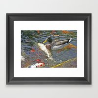 Pond Duck Koi Framed Art Print