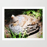 Ruffed Grouse Art Print