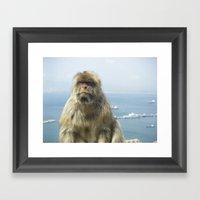 Monkey Of Gibraltar Framed Art Print