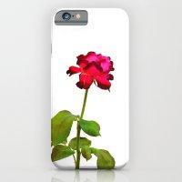 Magenta Red Rose iPhone 6 Slim Case